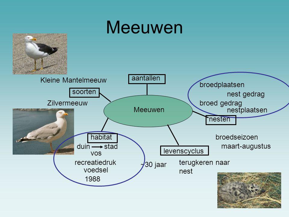Meeuwen aantallen Kleine Mantelmeeuw broedplaatsen soorten nest gedrag