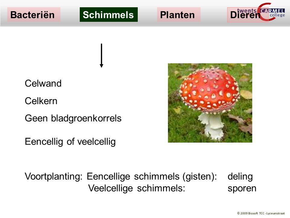 Bacteriën Schimmels. Planten. Dieren. Celwand. Celkern. Geen bladgroenkorrels Eencellig of veelcellig.