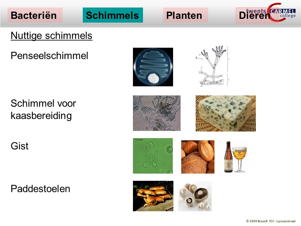 Bacteriën Schimmels. Planten. Dieren. Nuttige schimmels. Penseelschimmel. Schimmel voor kaasbereiding.