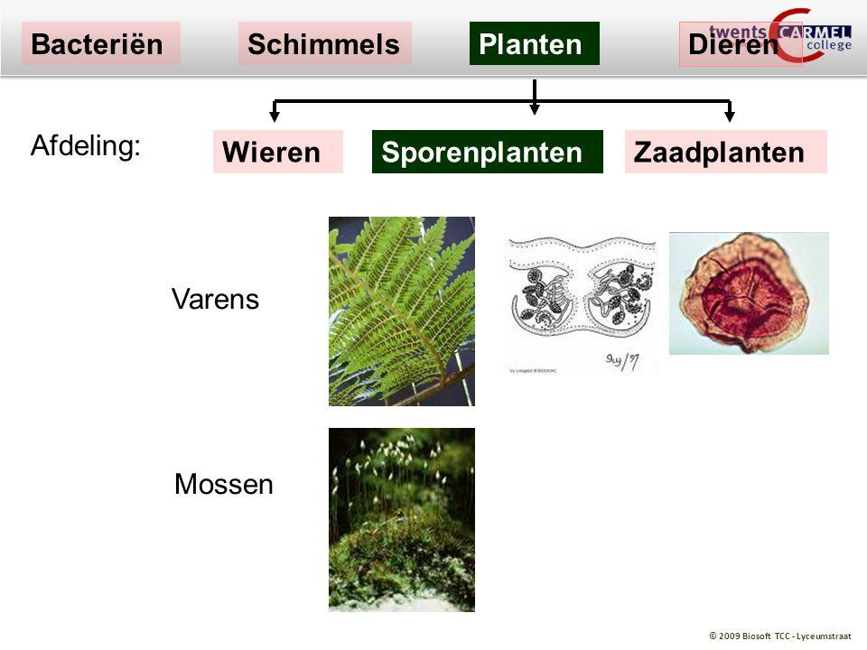 Bacteriën Schimmels Planten Dieren Afdeling: Wieren Sporenplanten Zaadplanten Varens Mossen