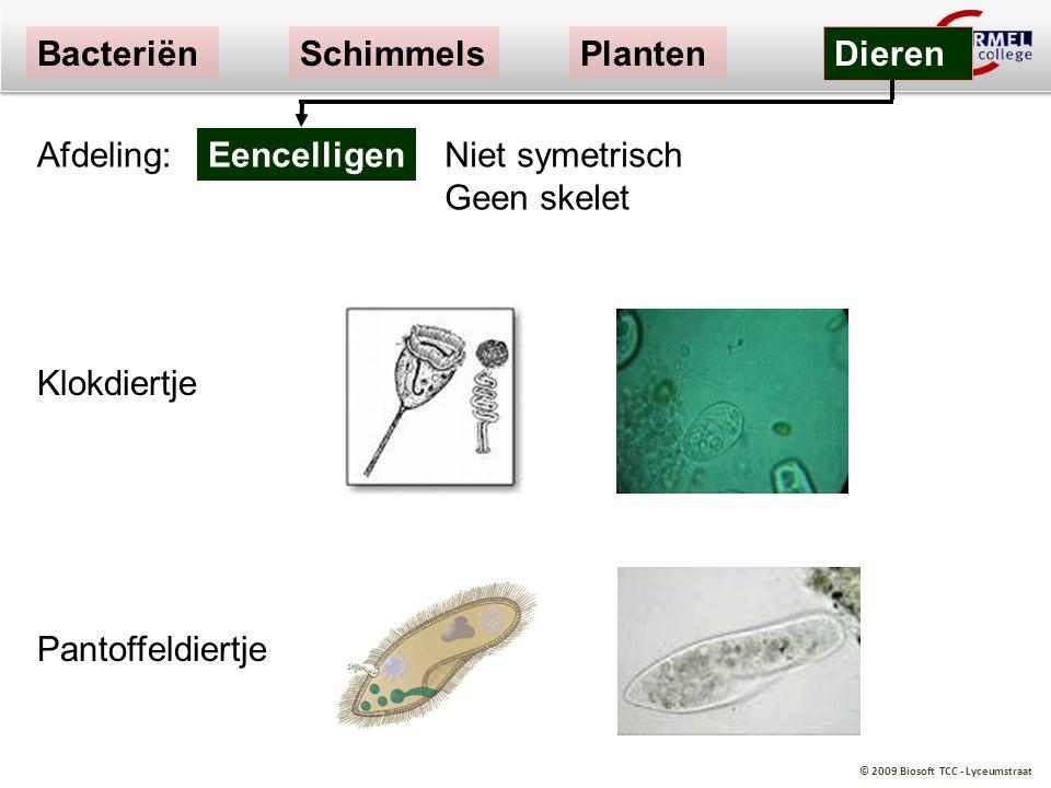 Bacteriën Schimmels. Planten. Dieren. Afdeling: Eencelligen. Niet symetrisch Geen skelet. Klokdiertje.