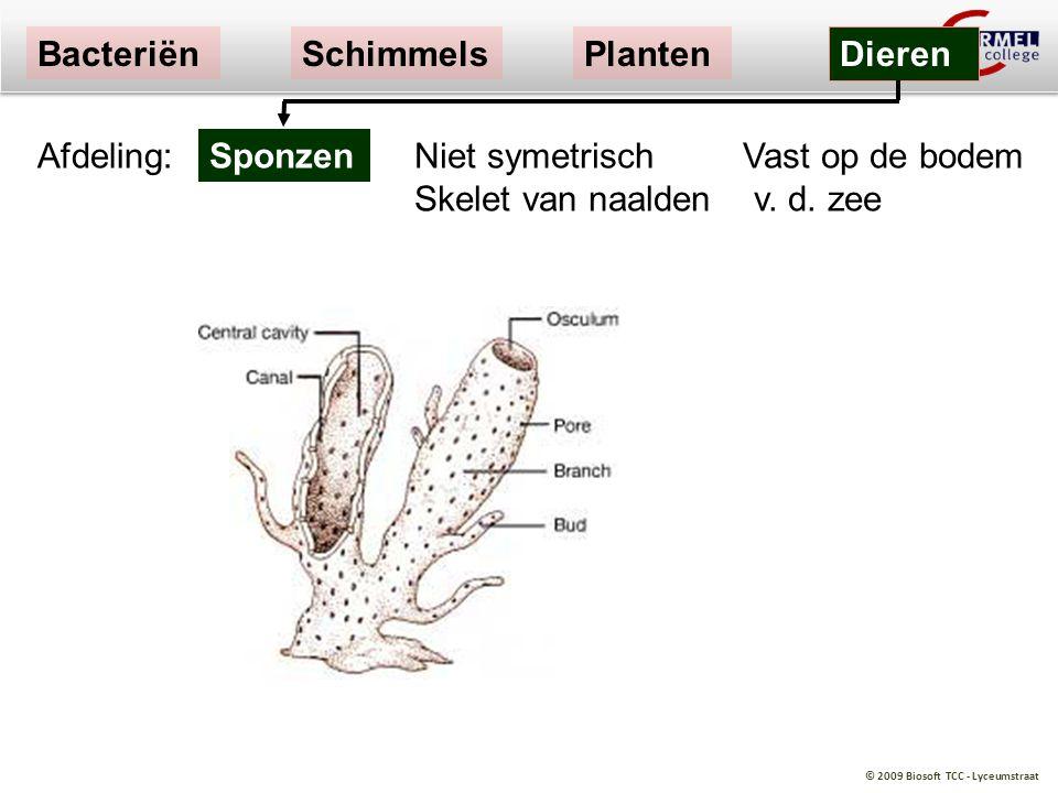 Bacteriën Schimmels. Planten. Dieren. Afdeling: Sponzen.