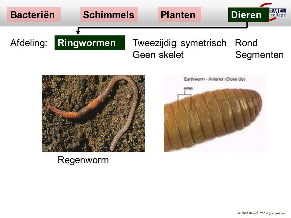 Bacteriën Bacteriën. Schimmels. Schimmels. Planten. Planten. Dieren. Dieren. Afdeling: Ringwormen.