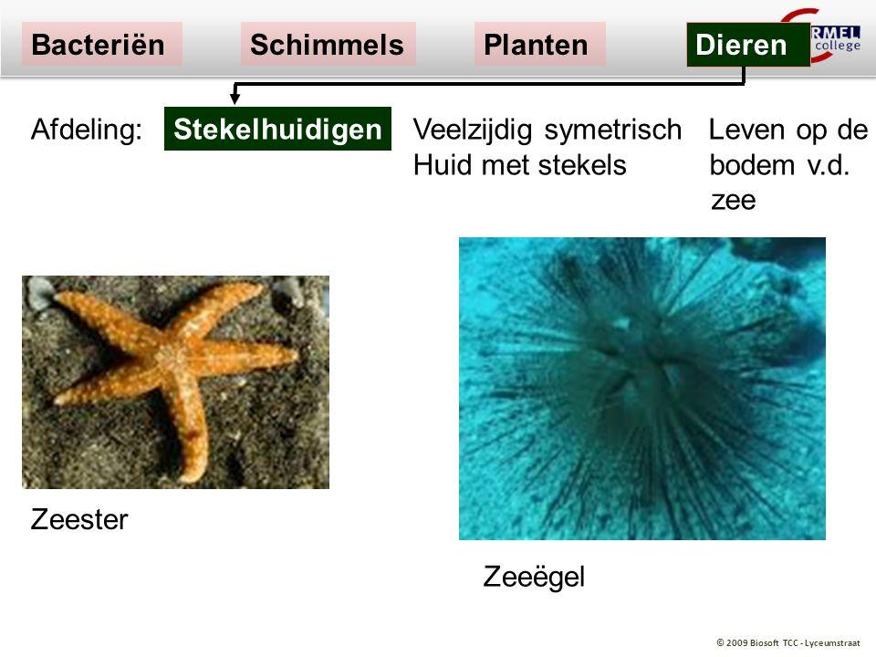 Bacteriën Schimmels. Planten. Dieren. Afdeling: Stekelhuidigen.