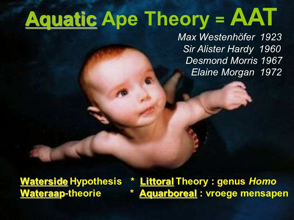 Aquatic Ape Theory = AAT