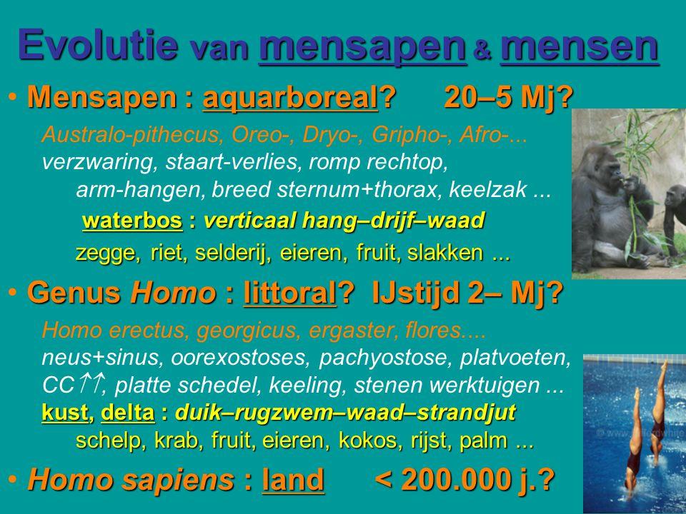 Evolutie van mensapen & mensen