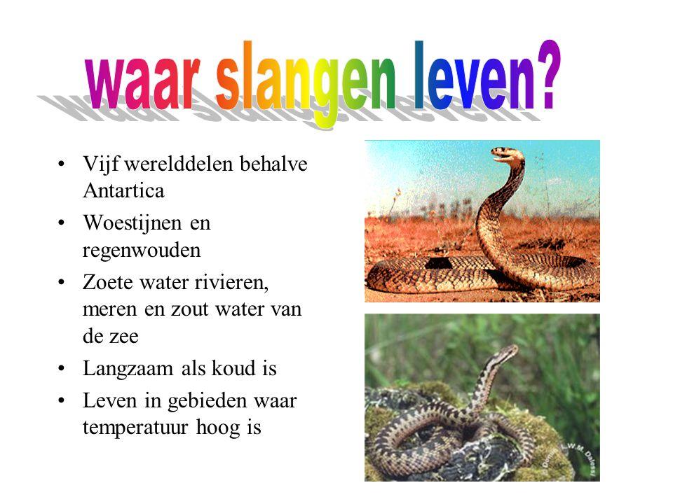waar slangen leven Vijf werelddelen behalve Antartica