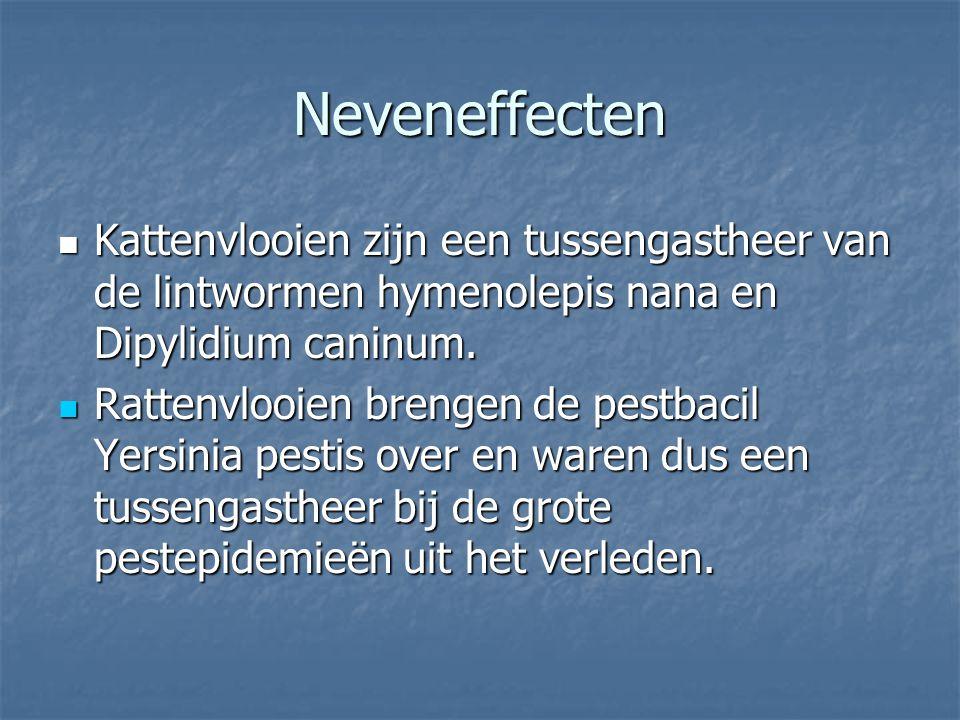 Neveneffecten Kattenvlooien zijn een tussengastheer van de lintwormen hymenolepis nana en Dipylidium caninum.