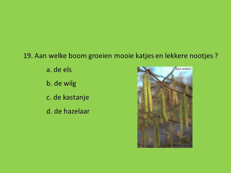 19. Aan welke boom groeien mooie katjes en lekkere nootjes