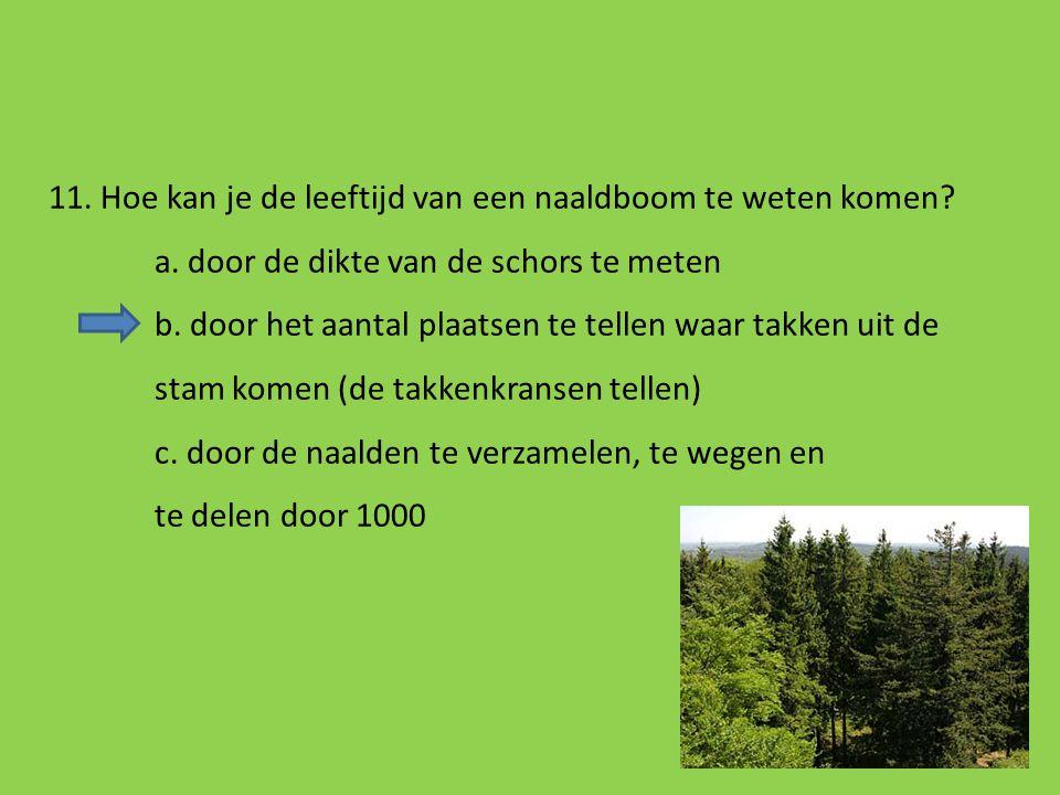 11. Hoe kan je de leeftijd van een naaldboom te weten komen