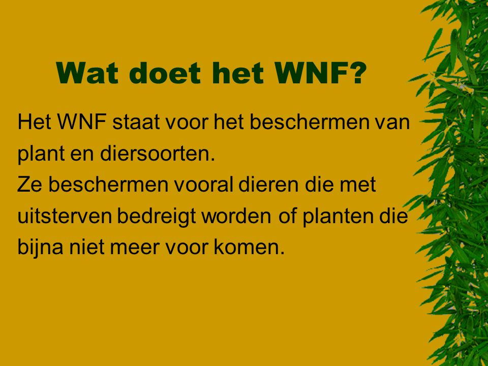 Wat doet het WNF Het WNF staat voor het beschermen van