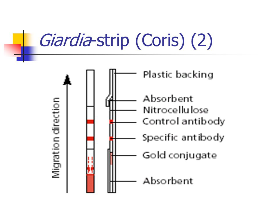 Giardia-strip (Coris) (2)