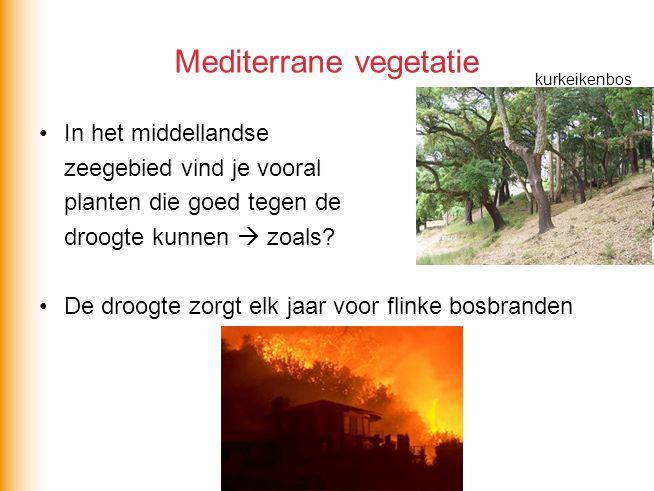Mediterrane vegetatie