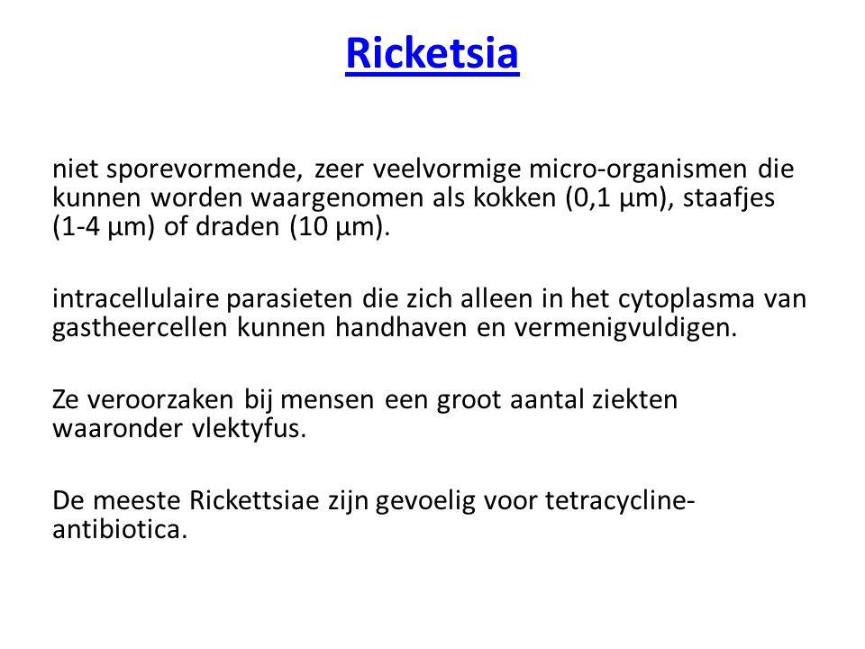 Ricketsia