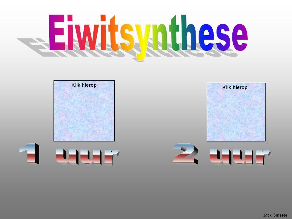 Eiwitsynthese Klik hierop Klik hierop 1 uur 2 uur Jaak Smeets