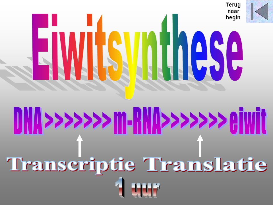 Terug naar begin Eiwitsynthese DNA >>>>>>> m-RNA>>>>>>> eiwit Transcriptie Translatie 1 uur