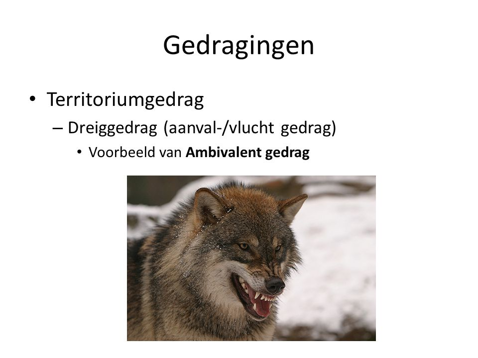Gedragingen Territoriumgedrag Dreiggedrag (aanval-/vlucht gedrag)