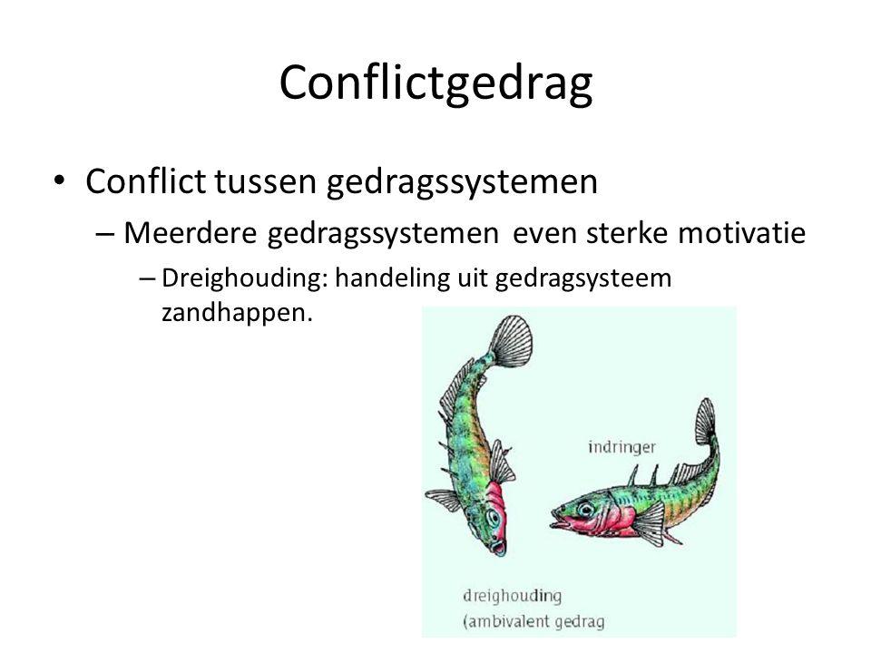 Conflictgedrag Conflict tussen gedragssystemen