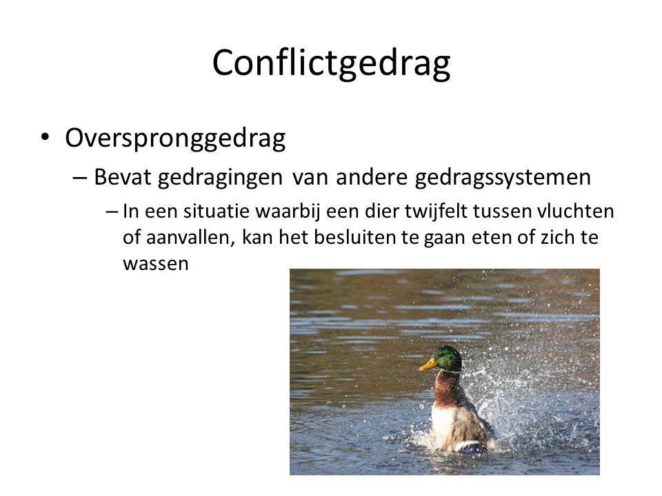 Conflictgedrag Overspronggedrag