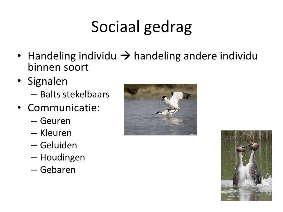 Sociaal gedrag Handeling individu  handeling andere individu binnen soort. Signalen. Balts stekelbaars.
