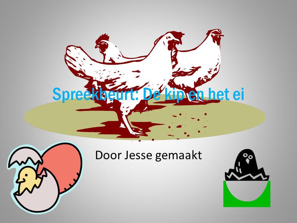 Spreekbeurt: De kip en het ei