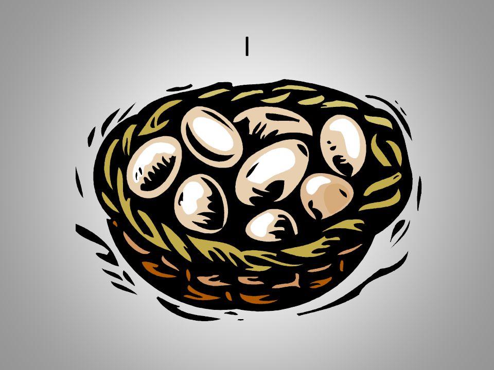 I Ik ben met heit naar een boer geweest en we mochten daar 8 eieren gratis meenemen om uit te broeden.