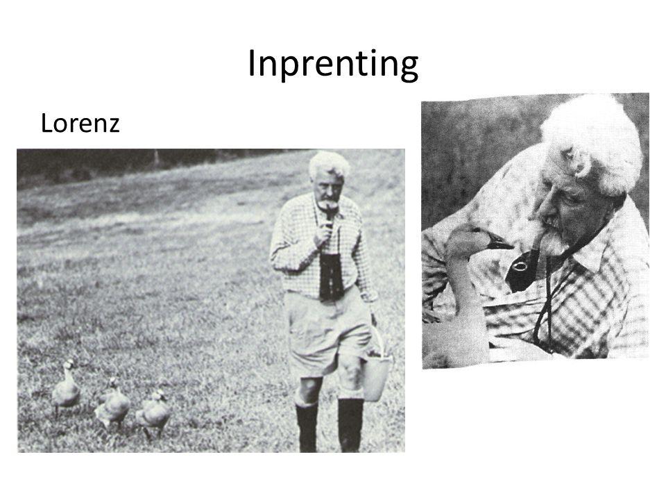 Inprenting Lorenz