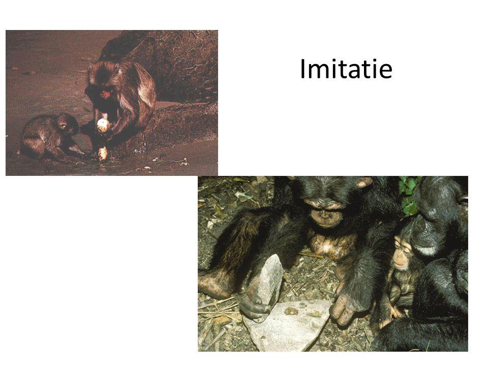 Imitatie