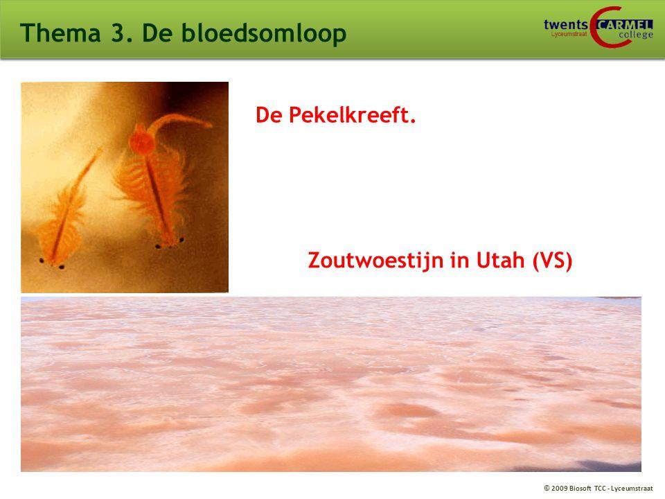 Thema 3. De bloedsomloop De Pekelkreeft. Zoutwoestijn in Utah (VS)
