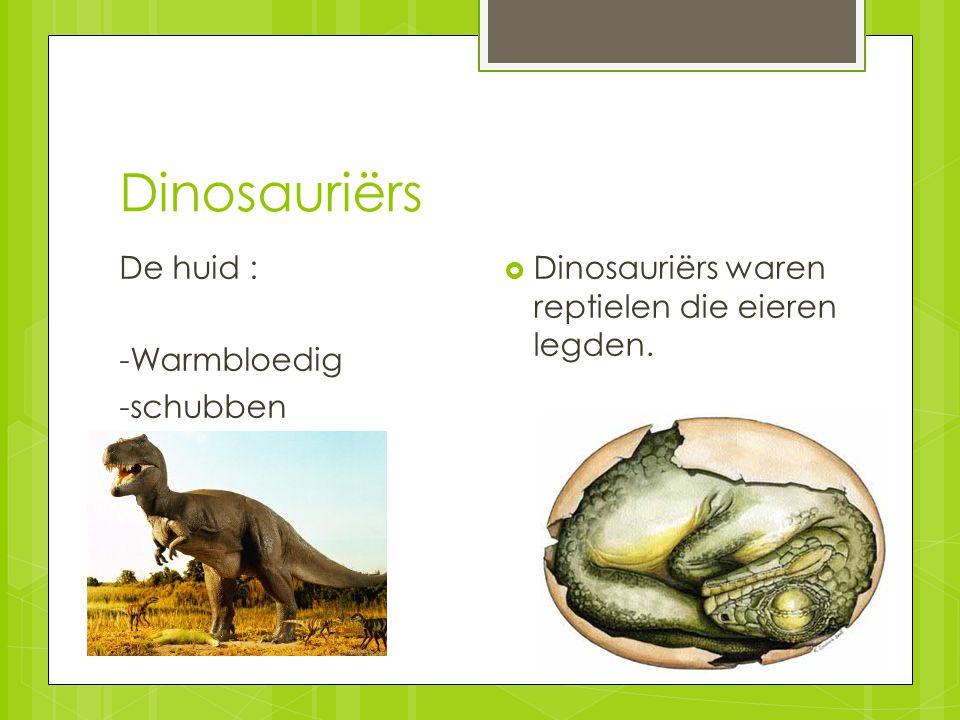 Dinosauriërs De huid : -Warmbloedig -schubben