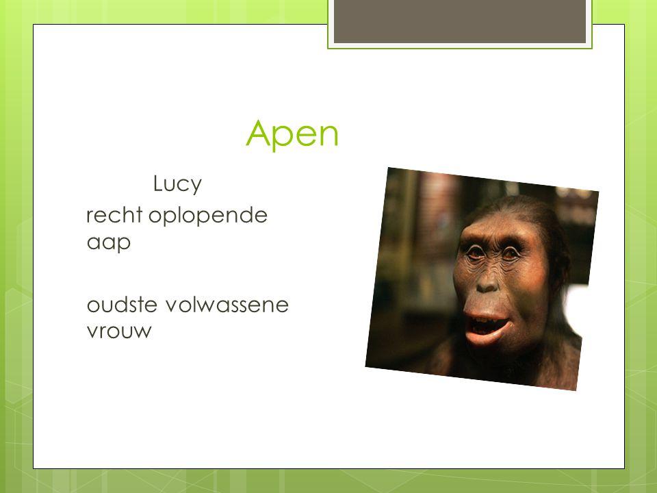 Apen Lucy recht oplopende aap oudste volwassene vrouw