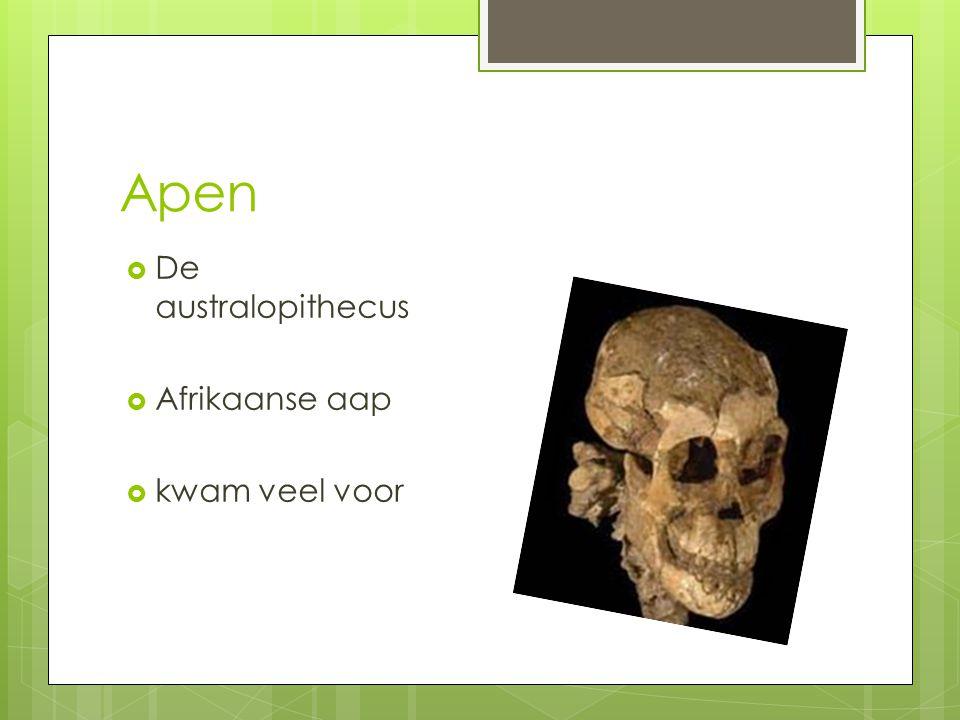 Apen De australopithecus Afrikaanse aap kwam veel voor