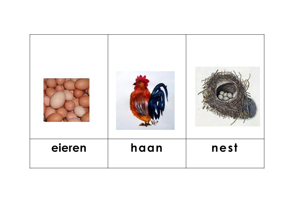 knop eieren haan nest