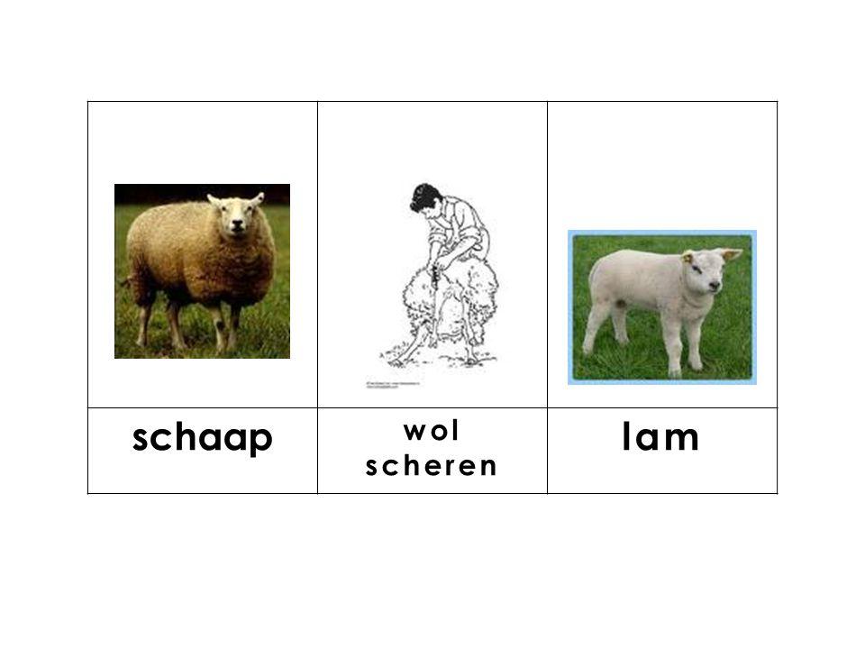 knop schaap wol scheren lam