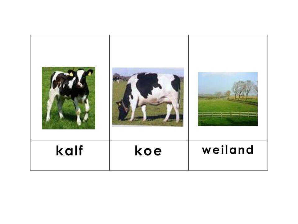knop kalf koe weiland