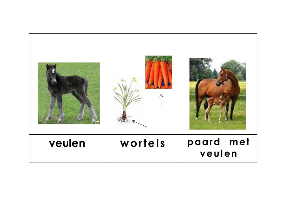 knop veulen wortels paard met veulen