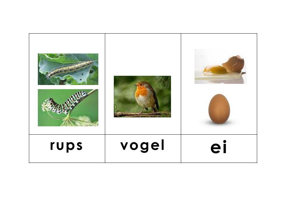 knop rups vogel ei
