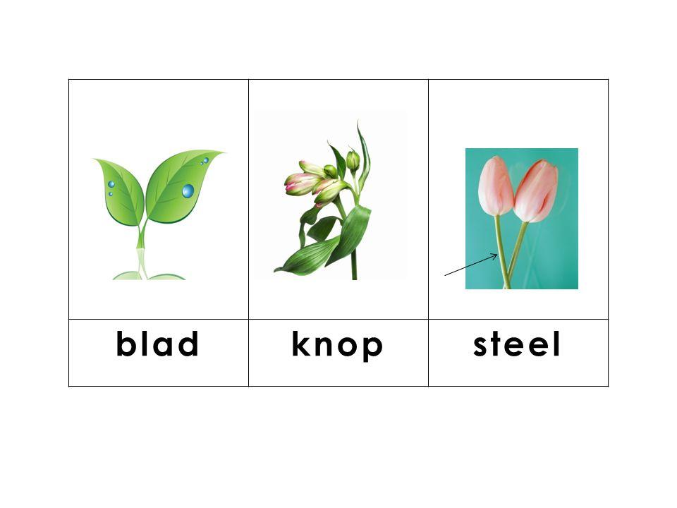 knop blad steel