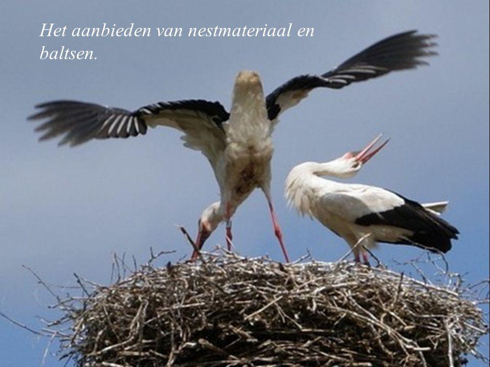 Het aanbieden van nestmateriaal en baltsen.