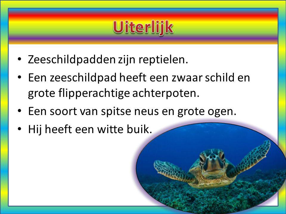 Uiterlijk Zeeschildpadden zijn reptielen.