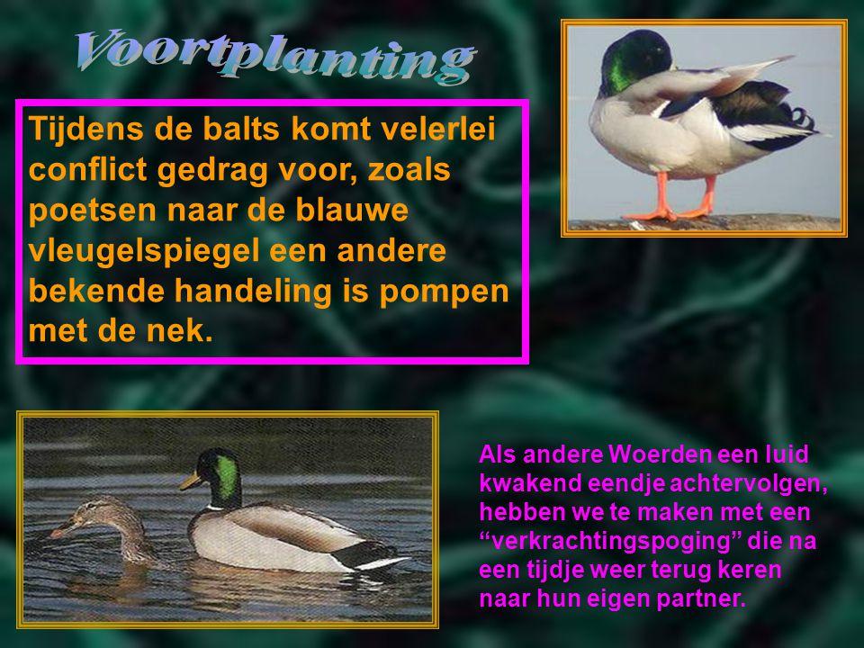 gemaakt voor: powerpointsite-bep.nl