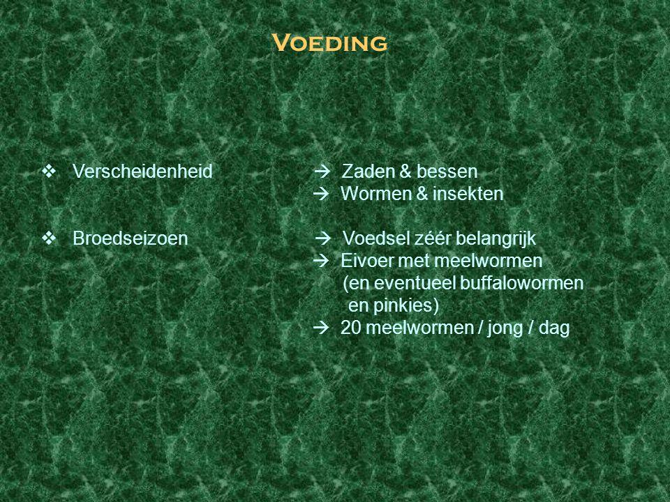 Voeding Verscheidenheid  Zaden & bessen  Wormen & insekten