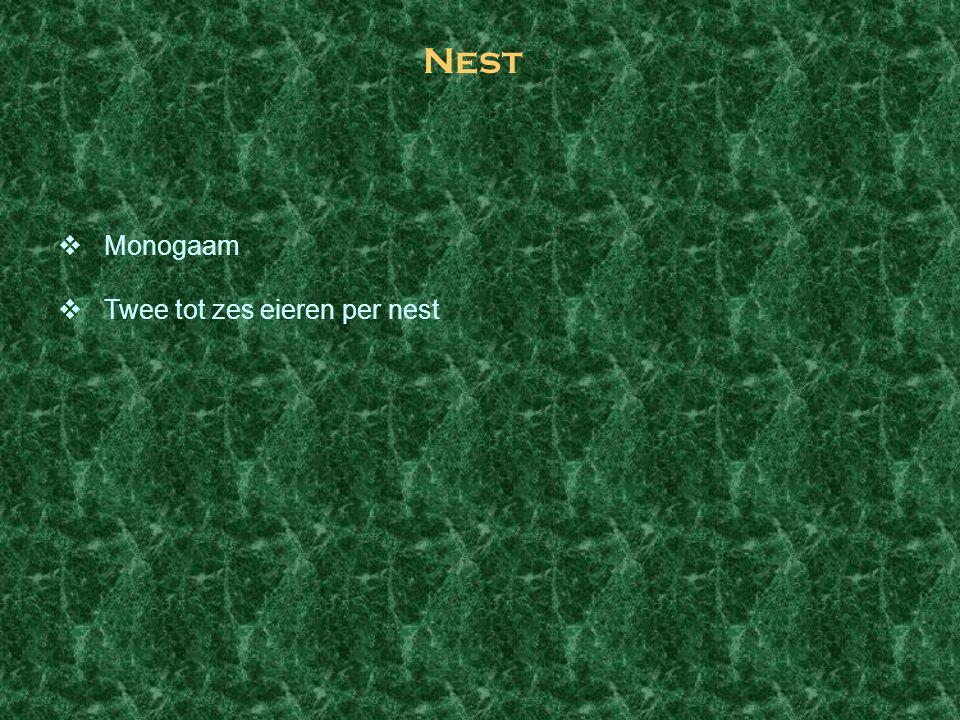 Nest Monogaam Twee tot zes eieren per nest