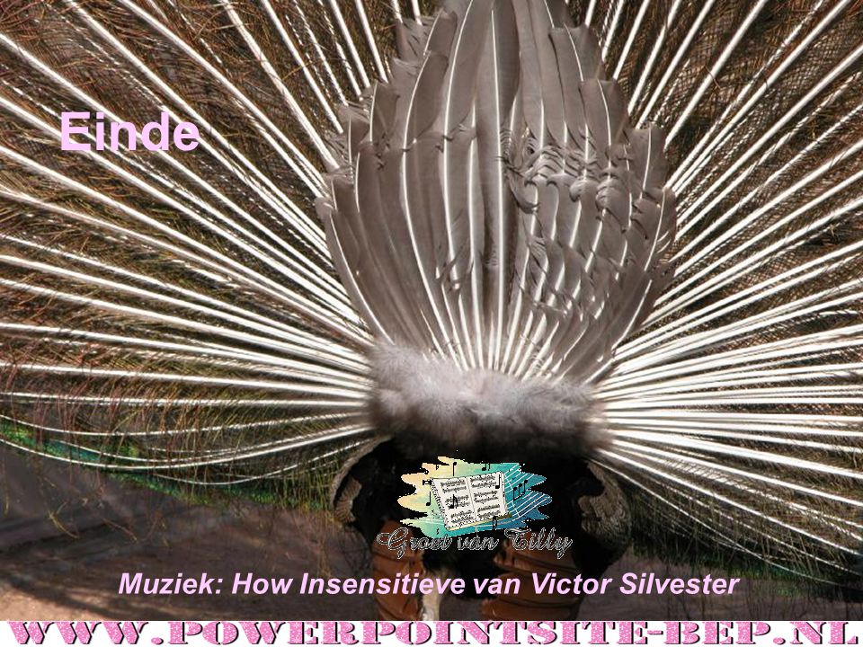 Einde Muziek: How Insensitieve van Victor Silvester