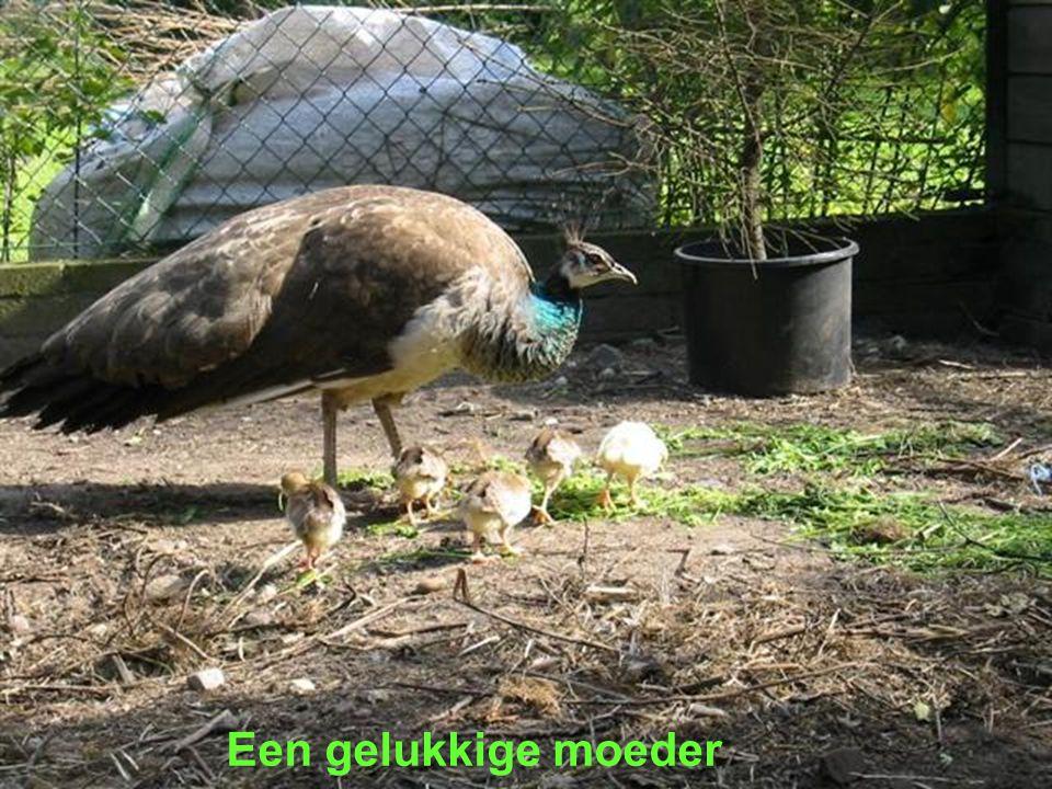 Een gelukkige moeder
