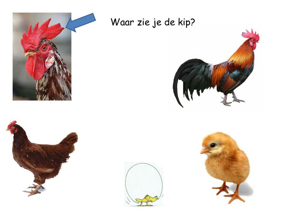 Waar zie je de kip
