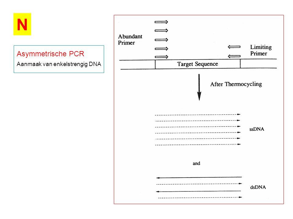 N Asymmetrische PCR Aanmaak van enkelstrengig DNA