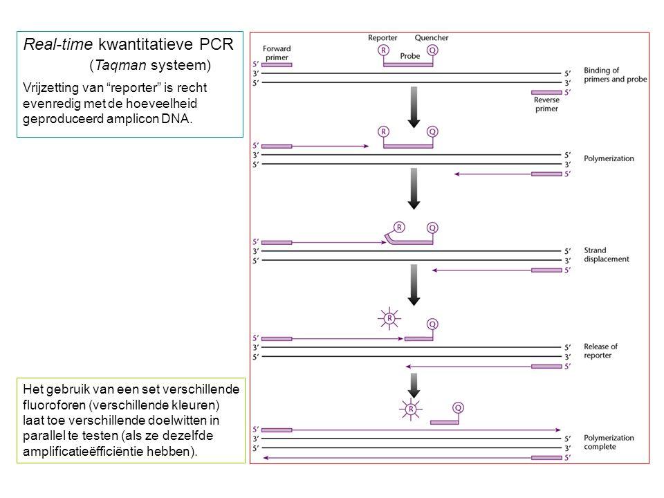 Real-time kwantitatieve PCR (Taqman systeem)