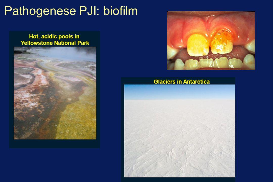 Pathogenese PJI: biofilm