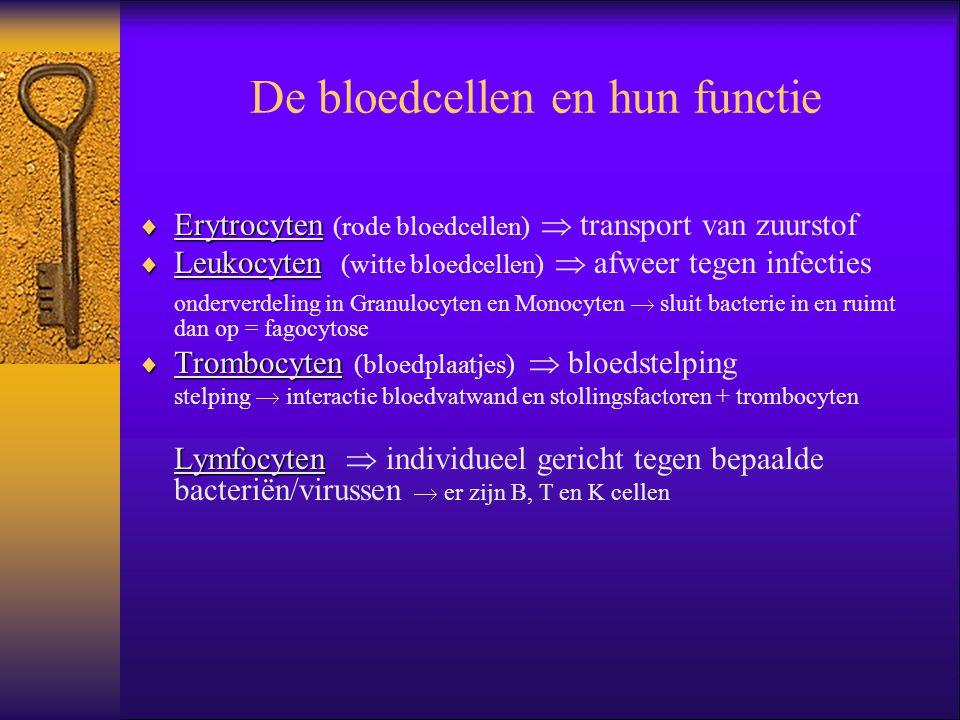 De bloedcellen en hun functie